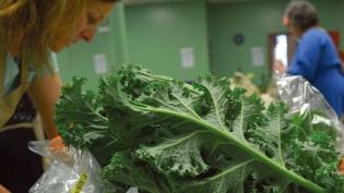 Fresh Kale Buy Iowa